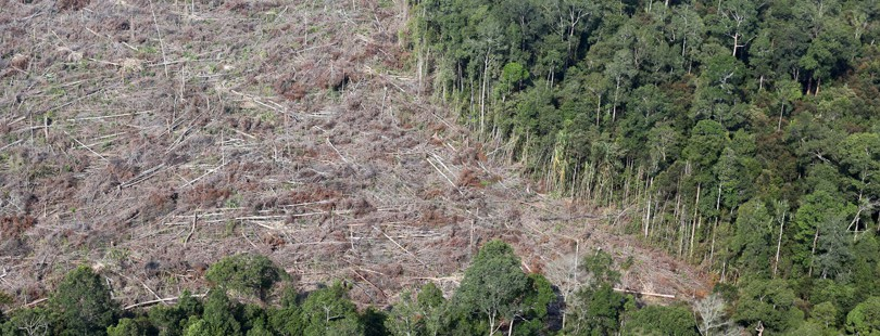 Indonesian palm oil giant joins no-deforestation pledge amid criticism from politicians