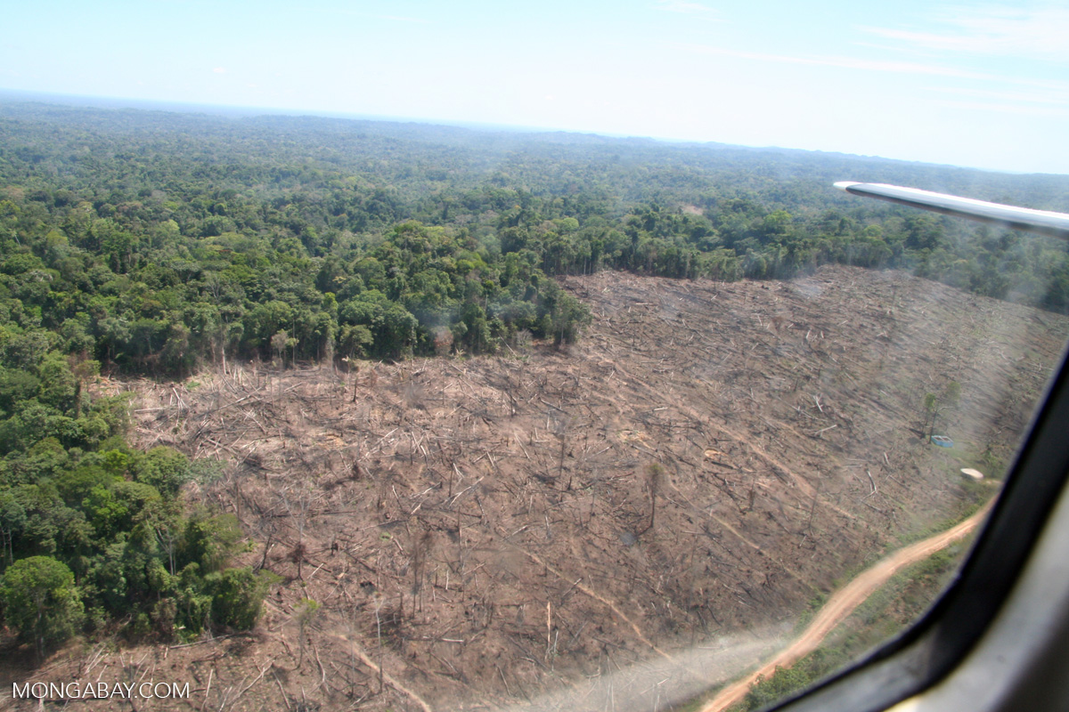 percent of deforestation for paper This sample deforestation research paper is published for  deforestation is so basic that it  cultivation rose from about 5 percent of land use in the sixth.