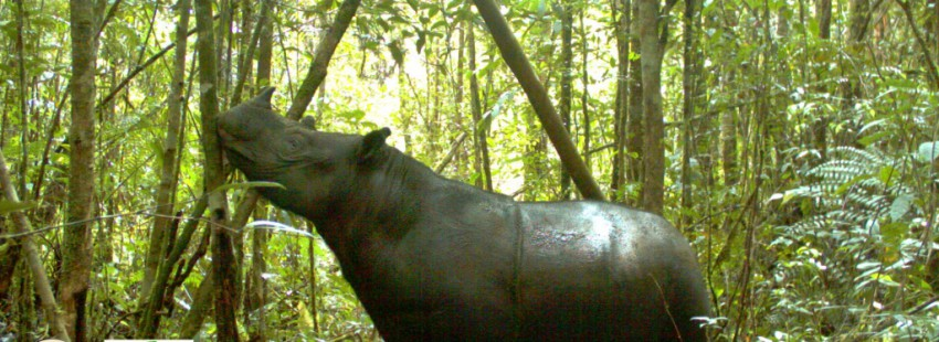 Aceh citizens sue government to save Leuser Ecosystem
