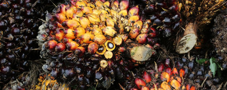 Indonesian officials resist movement to end deforestation for palm oil