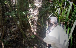 Nature guide freed in Madagascar 5 months after arrest for exposing rosewood trade