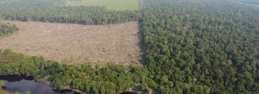 Global forest loss reached 46 million acres in 2014