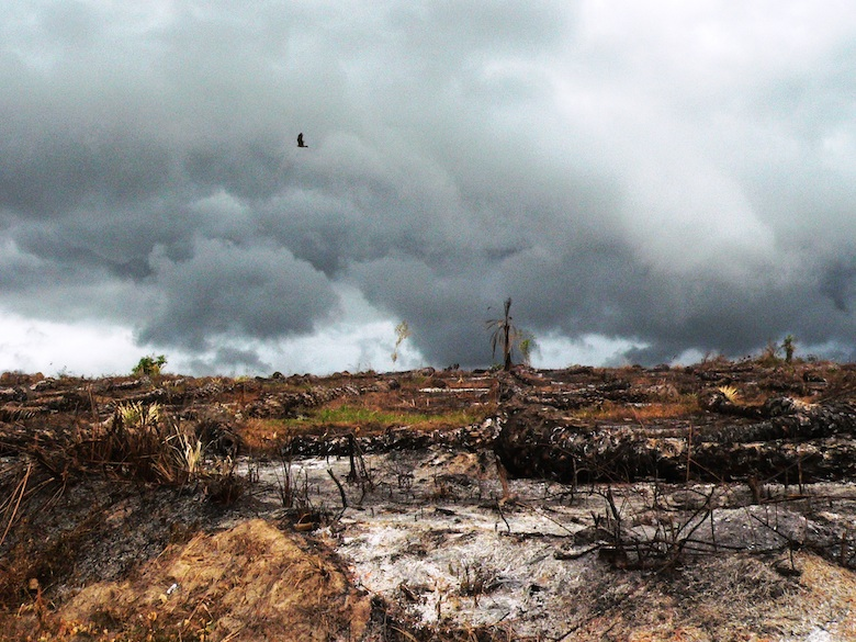 A black Kite flies over burned forest. Photo by Nicole Arcilla.