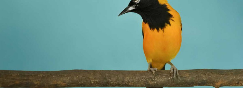 Trafficked tropical animals: the ghost exports of Venezuela