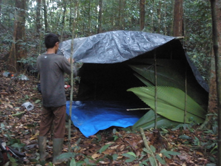 The three-person field team constructs a new simple shelter each night at a new location. To travel light, they only bring two tarps and make the frame from local plants. Photo by Matthew Luskin / NGS.