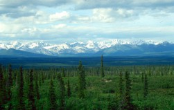 World's vast boreal forests could 'hit a tipping point' this century, scientists say