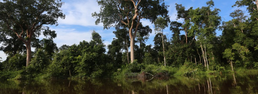 COP21 agreement prominently addresses protection of earth's forests