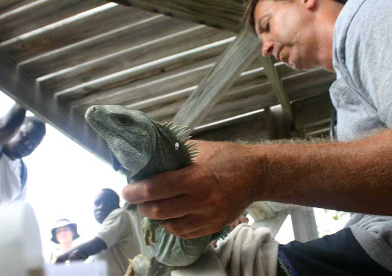 Students and conservation staff on Little Water Cay observe hands-on iguana fieldwork by the San Diego Zoo research team, led here by Dr Glenn Gerber. Photo by Lee Pagni