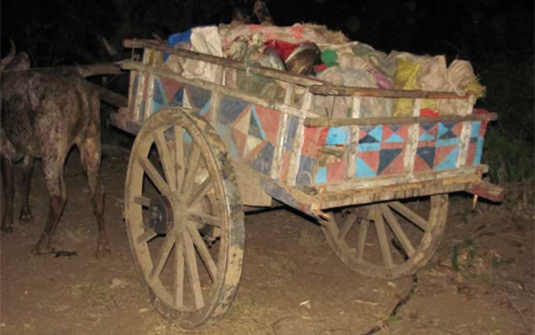 An oxcart loaded with bags of tortoises and tortoise meat. Poachers formerly transported loads of live tortoises, but today, generally roast the meat in the field for easier transport. Photo courtesy of TSA