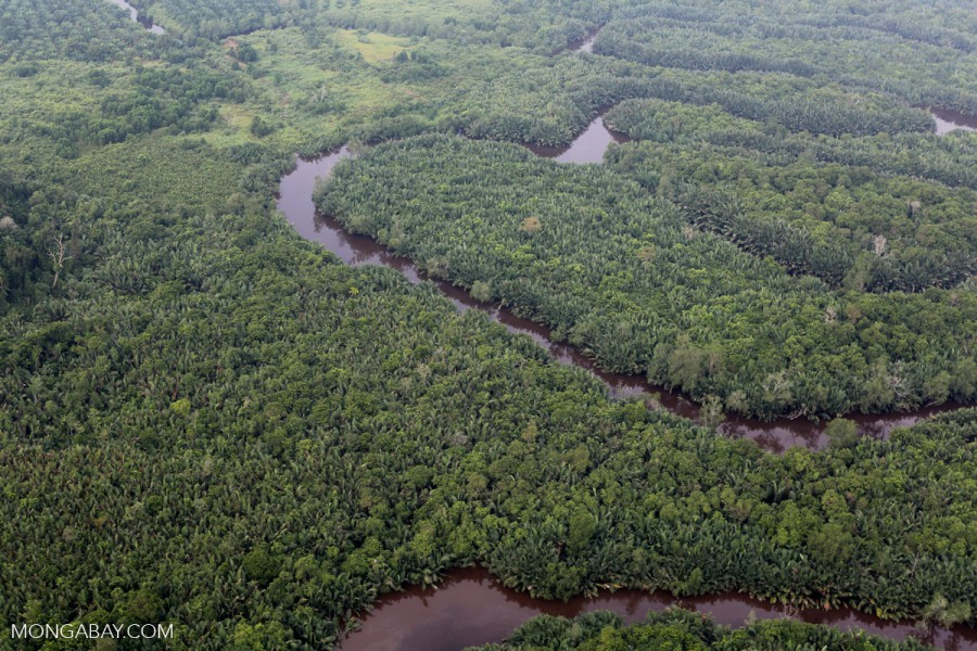 A peat forest in Indonesian's Riau province on the island of Sumatra. Photo by Rhett A. Butler