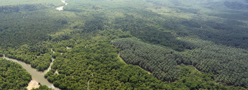 When is tree-cutting deforestation? Palm oil companies set their definition