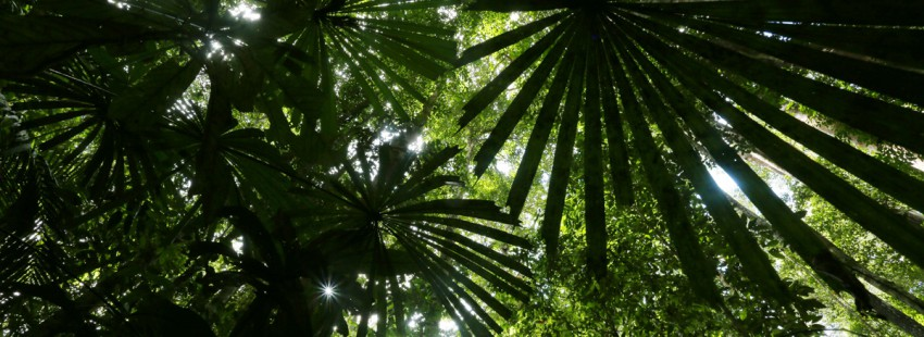 The year in rainforests: 2015
