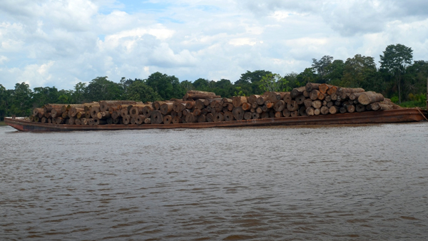 A barge transporting logs travels down the Amazon River in northern Peru. Photo by Clinton N. Jenkins.
