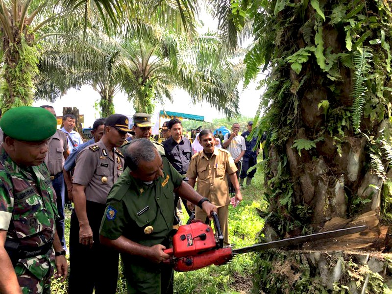 Hamdan Sati, the head of Aceh Tamiang regency, fells an illegal oil palm tree. Photo courtesy of Forum Konservasi Leuser