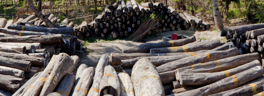 International embargo on exports of Madagascar's precious woods extended
