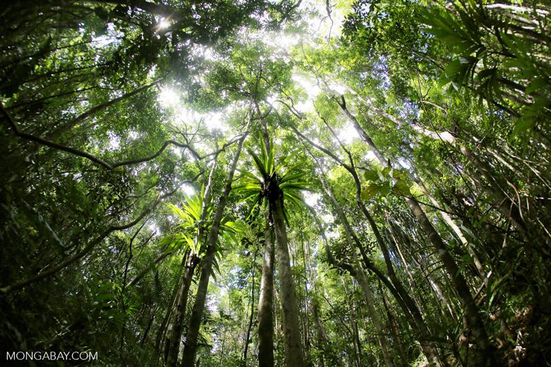 Madagascar rainforest, home to many endemic amphibian species. Photo by Rhett A. Butler