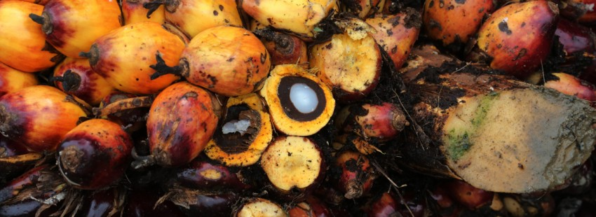 Do palm oil financiers care about sustainability?