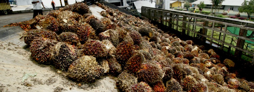 Palm oil expands in Aceh