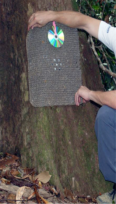 An example of one of the scent-baited hair traps used in the study, designed to target felids.