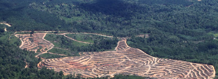 India, China, Indonesia score lowest when it comes to tropical forest protection