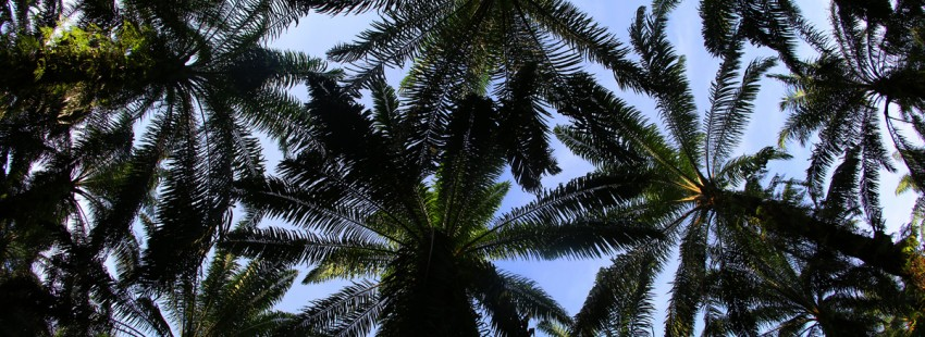 Malaysian palm oil giant IOI suspended from RSPO