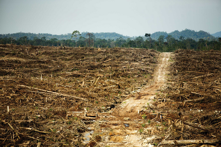 Land cleared for palm oil plantations in Indonesia. Palm oil has been linked to land grabbing in South-East Asian countries. Photo by David Gilbert/RAN Flickr Creative CommonsLicense.