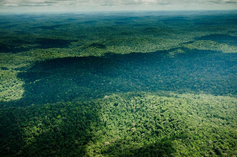 The Uatumã Biological Reserve in the state of Amazonas, Brazil. The reserve is part of WWF's Amazon Region Protected Areas program, which brings together private financers and the Brazilian government to establish and manage protected areas. Photo by WWF-US / Ricardo Lisboa.
