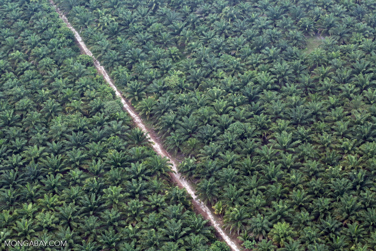 An oil palm plantation in Indonesia's Riau province. Photo by Rhett A. Butler/Mongabay