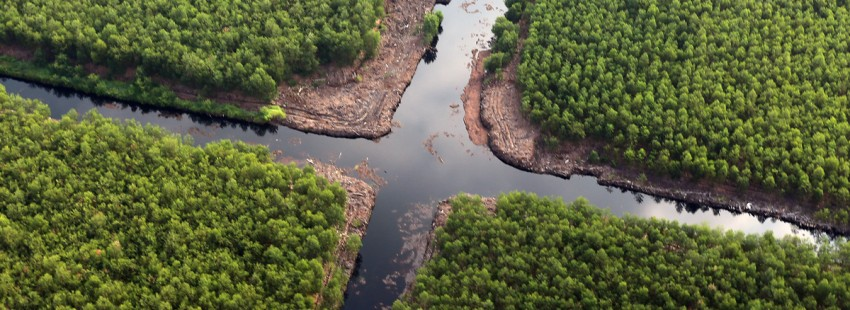 With haze threatening return, Indonesian forestry giant pushes peatlands restoration model