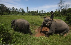 NGO sues Aceh official over cement factory permit in Leuser Ecosystem