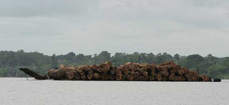 Rainforest logs transported by barge in Gabon. No matter how conscientious oil palm developers may try to be, there is no question that their work will destroy and fragment significant forest habitat. However, careful scientific planning by agribusiness in cooperation with conservationists can reduce impact. Photo by Rhett A. Butler