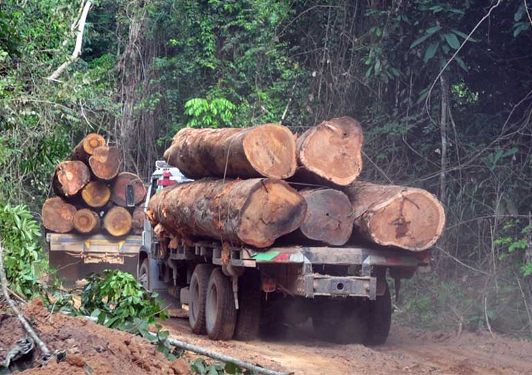 Timber trucks without license plates illegally moving logs out of a Brazilian conservation unit near Uruará. Photo by Sue Branford