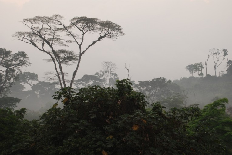 Rainforest outside Mundemba, Cameroon. Photo by John C. Cannon.