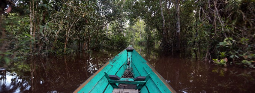 $1m for devising best way to map Indonesia's peatlands