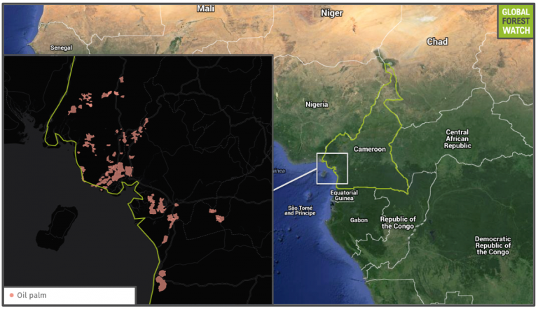 Cameroon's palm oil plantations all lie along or near its coastal region.