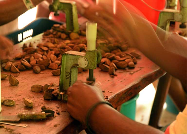 A tough nut to crack. A family worker prepares Brazil nuts for market, a sustainable business that is much easier to operate with the simple machines provided through government support. Photo by Natalia Guerrero