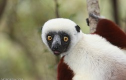 Humans torched Madagascar's forests 1,000 years ago, driving mass extinction