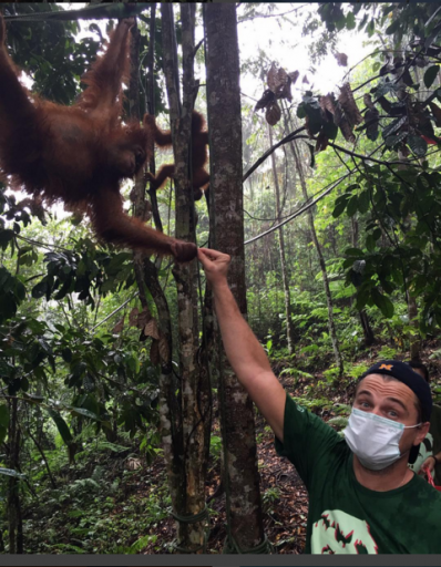 "A photo uploaded to DiCaprio's Instagram account on Thursday. The caption read, ""As the forest of the #Indonesian #LeuserEcosystem continues to be cleared to meet demand for Palm Oil, the critically endangered Sumatran #orangutan is being pushed to the brink of extinction...If we don't stop this rampant destruction, the Leuser Ecosystem and the Sumatran orangutans that call it home could be lost forever. Click the link in the bio to support this important work. #Indonesia"""
