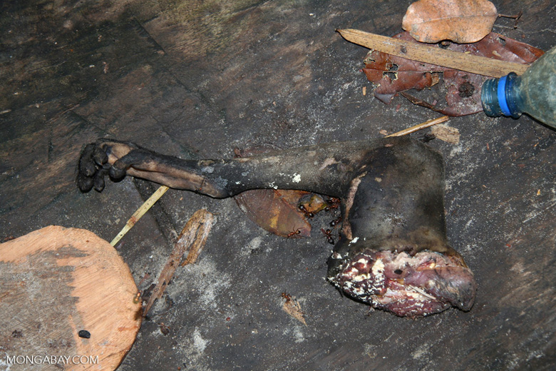 Severed monkey leg in the bottom of a canoe, Gabon. Photo by Rhett A. Butler.