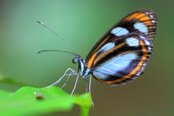 Unidentified butterfly in Yasuni National Park in the Ecuadorian Amazon. Photo by Jeremy Hance.