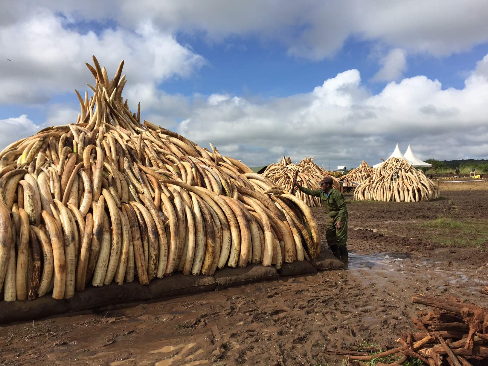 Image result for ivory
