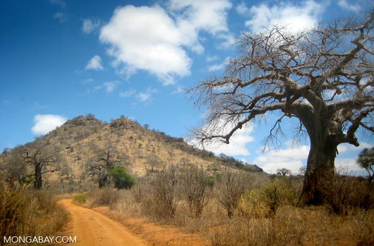 Tarangire, Tanzania. Photo by Rhett A. Butler