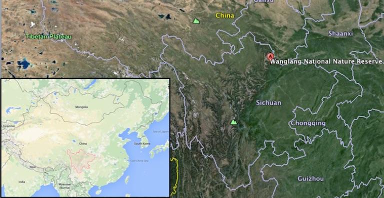 Map shows Wanglang National Nature Reserve in Sichuan province. (Inset shows Sichuan province in China.) Map courtesy of Google Maps and Google Earth.