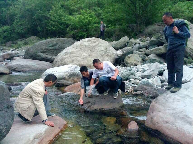 Guanba villagers release fish fry into the Guanba River in summer 2013. The village's effort to restore a local catfish species is paying off, with the number of fish rising. Photo Courtesy of Guanba village.