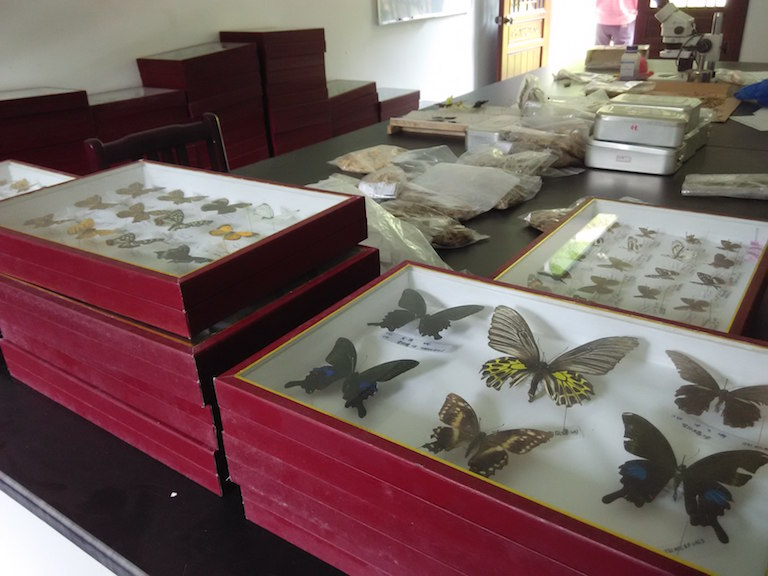 A collection of butterflies from Laohegou Nature Reserve. Photo by Wang Yan.