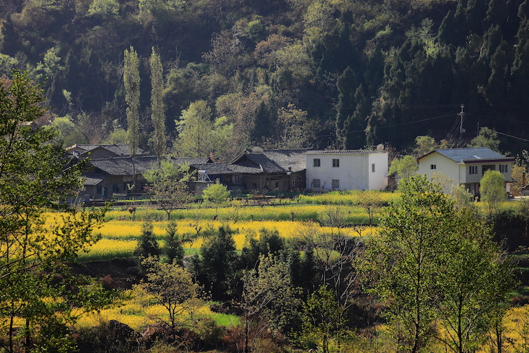 Farmland in the village of Minzhu, near Laohegou Nature Reserve. Photo courtesy of Laohegou Nature Reserve Center.