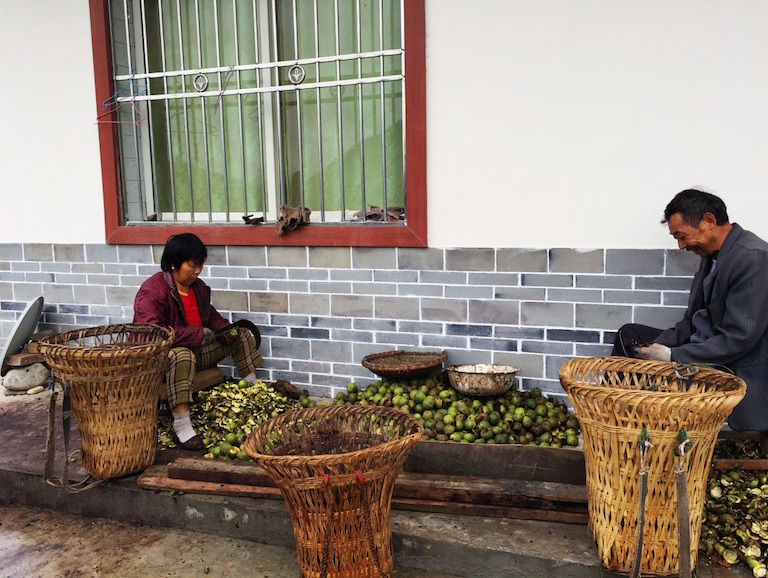 Minzhu villagers prepare walnuts for targeted customers. Villagers can sell organic agricultural products to board members of the foundation that supports Laohegou Nature Reserve. Photo courtesy of Laohegou Nature Reserve Center.