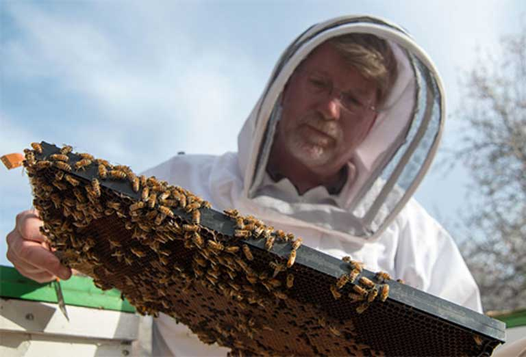 US Department of Agriculture Agricultural Research Service entomologist Dr. Jeff Pettis examines a bee colony in McFarland, CA in 2014. Bees are one of nature's many pollinators and are crucial to the production for fruits and vegetables —including apples, squash and almonds. Honeybees are responsible for pollinating approximately $15 billion worth of US crops annually. Their disappearance would have massive repercussions for our food supply. Photo by David Kosling / USDA.