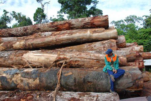 Amazonian timber yard_Jos Barlow