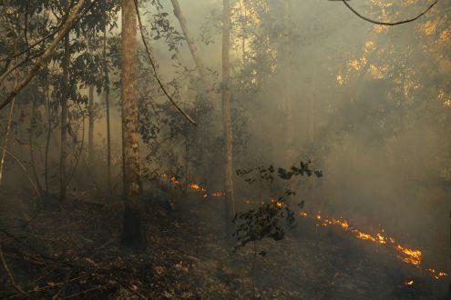 Amazonian wildfires_Adam Ronan